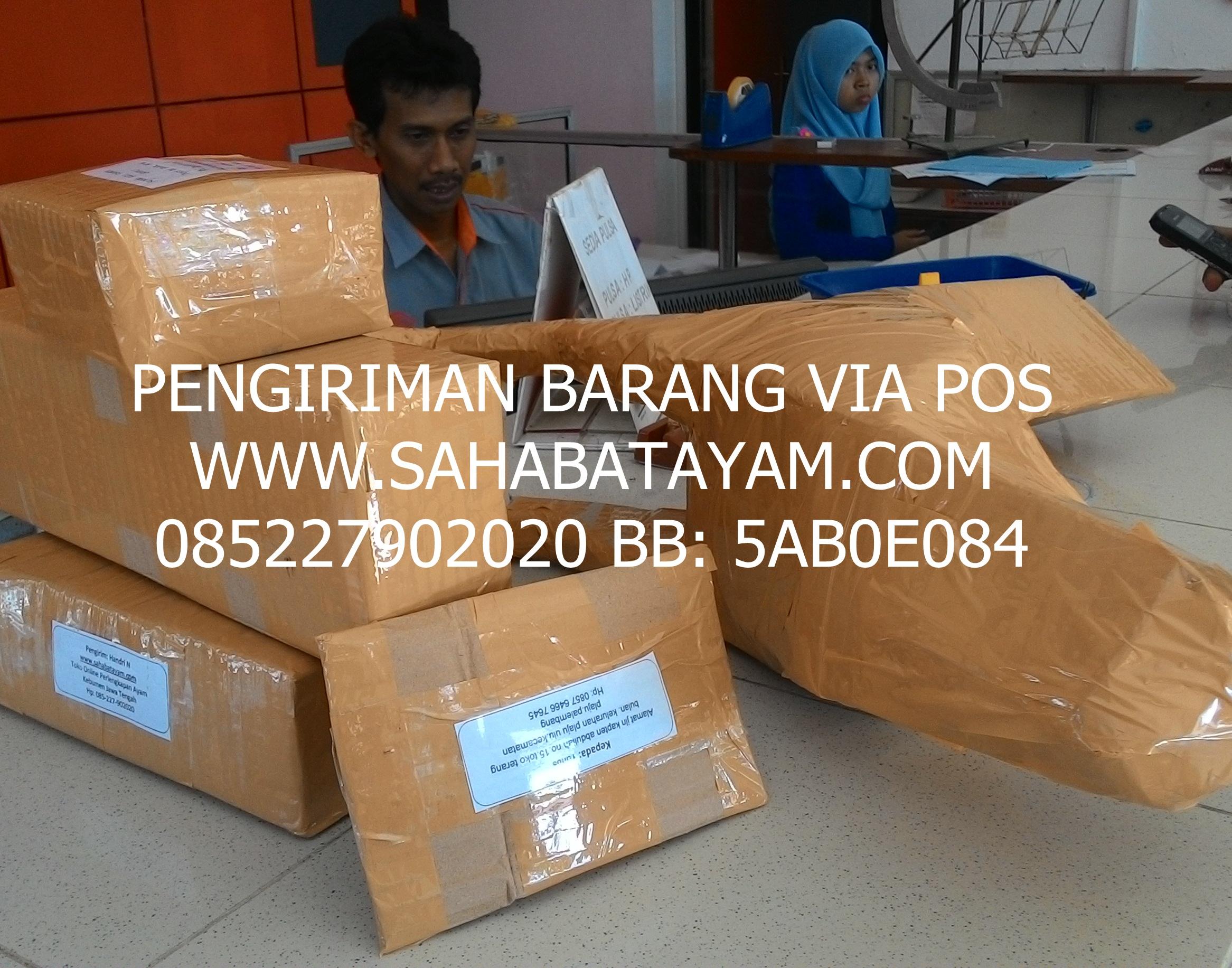 dokumentasi kirim barang www.sahabatayam.com